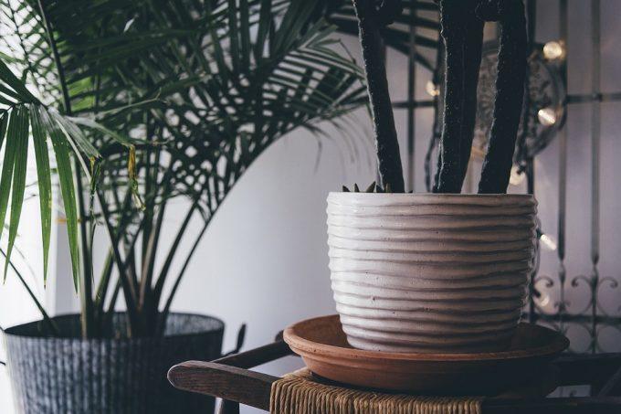 hoge kamerplanten
