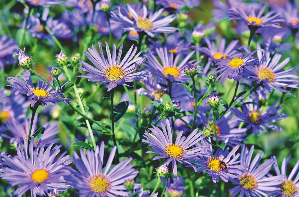 tuininspiratie - bloementuin