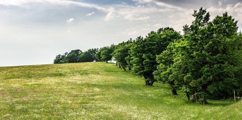 grasveld beschermen